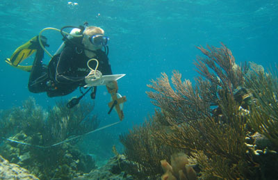 Robbie Lamb censuses coral-reef fishes in the Bahamas