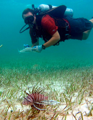 Mark Albins conducting underwater Lionfish research